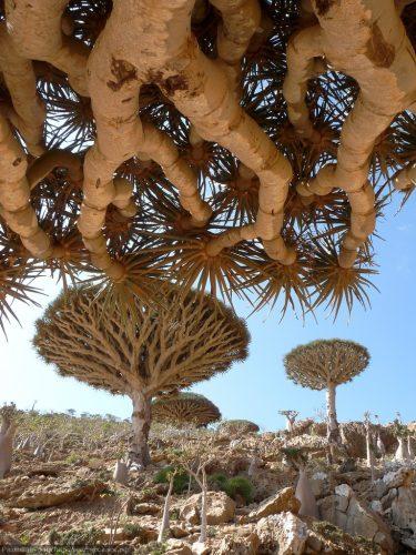 занять все откуда на железных островах дерево киски лощеные тела